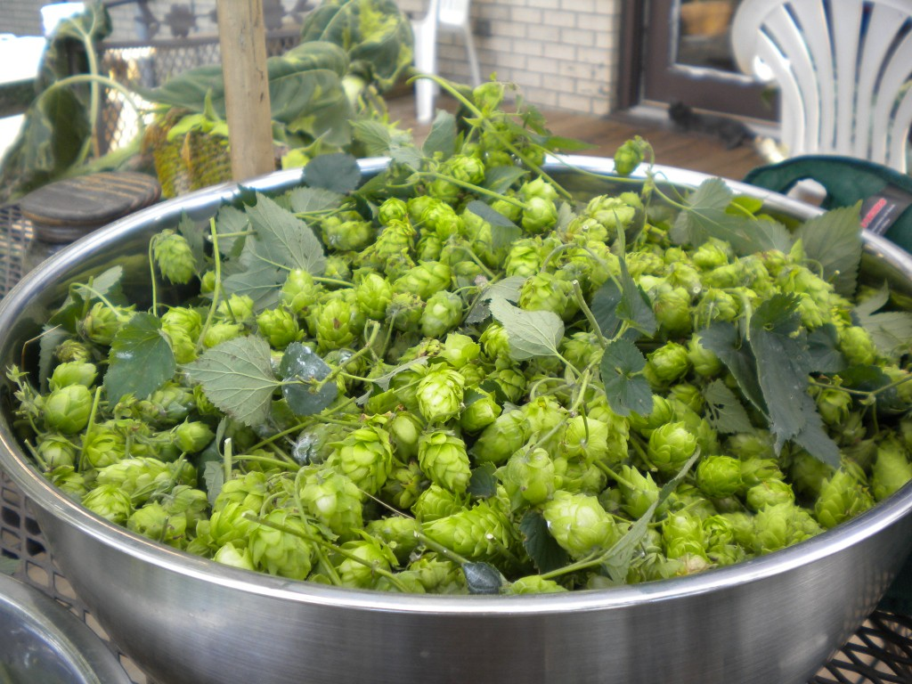 hops in bowl